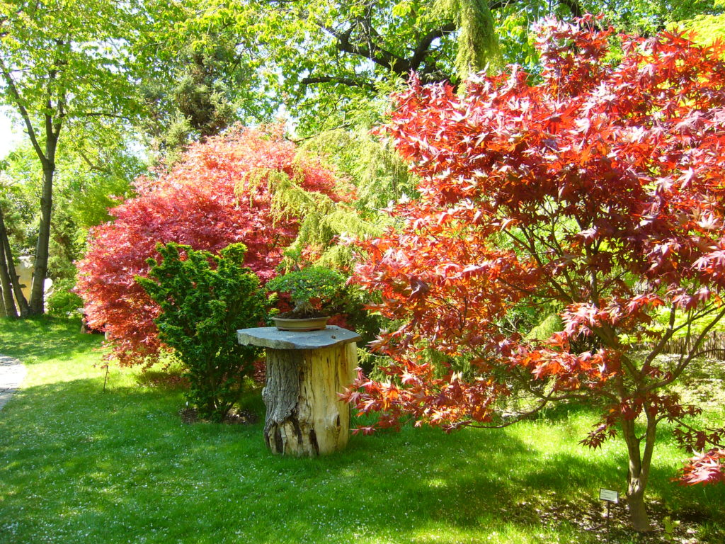 botanicka zahrada hl m prahy 79c 1024x768 Do pražské oázy klidu, zeleně a pestrých barev